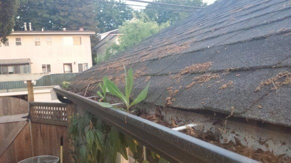 cleaning-your-gutters